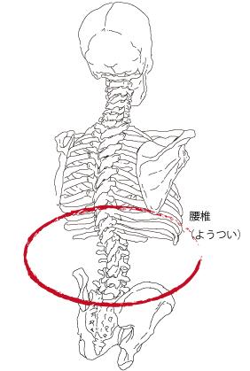 腰椎_02